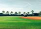 Disney field